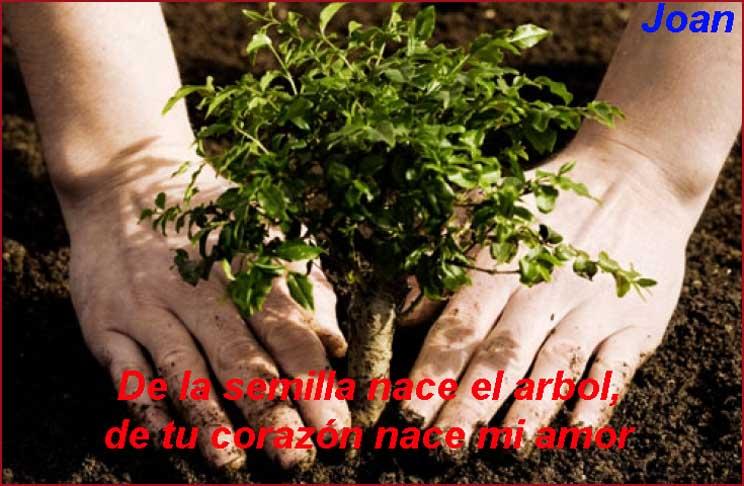 Palabras de amor planta un árbol