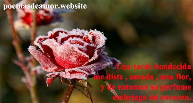 Poesia a la flor